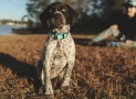 Best Bark Collar: Types and Benefits
