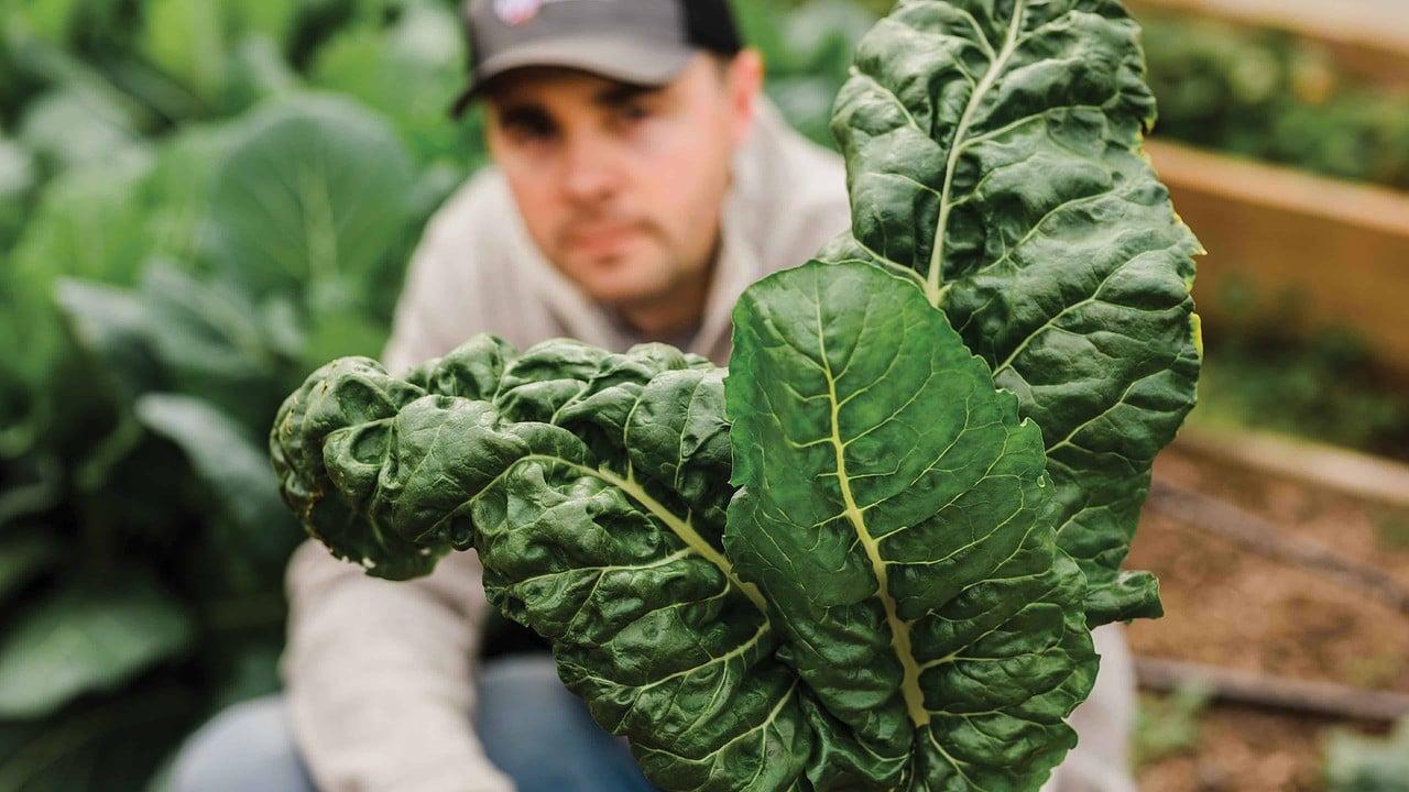 High Tunnel vegetable gardening