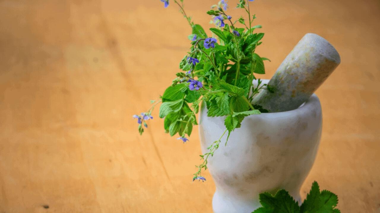 plantas ansiedad