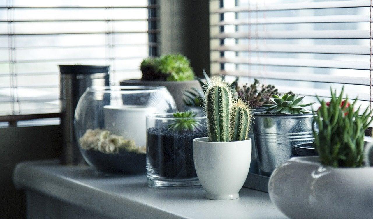 comment planter une plante dans son pot