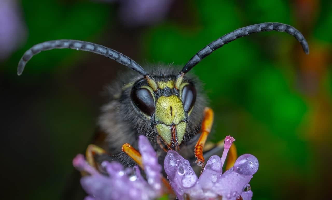 What is Alfalfa Honey