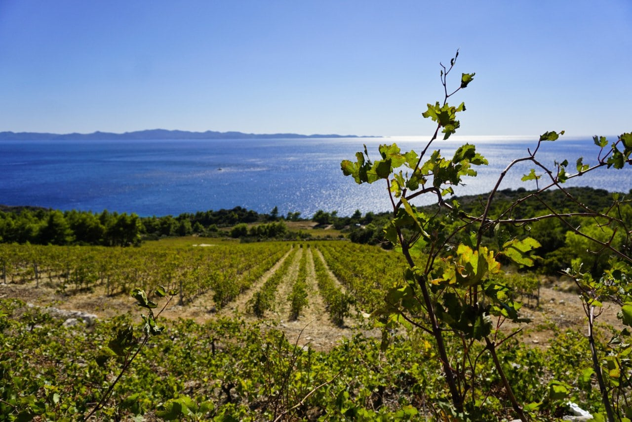 Wine from Croatia, Dingac slopes, Peljesac - Experiencing the Globe
