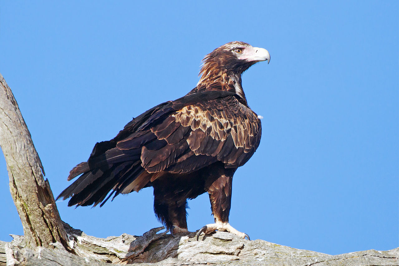 John Auer | Former Jam Land Director | Masterminded Over 400 Eagle Deaths
