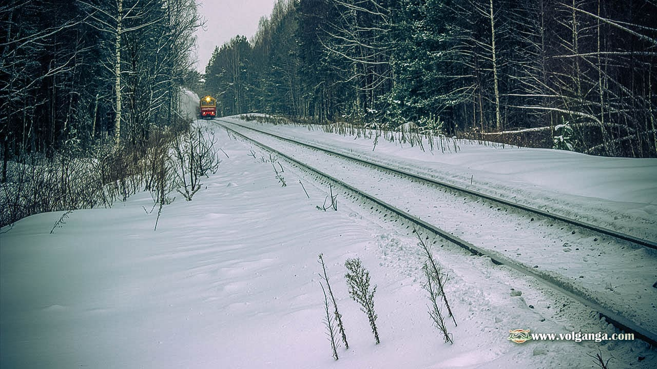 train in the winter forest