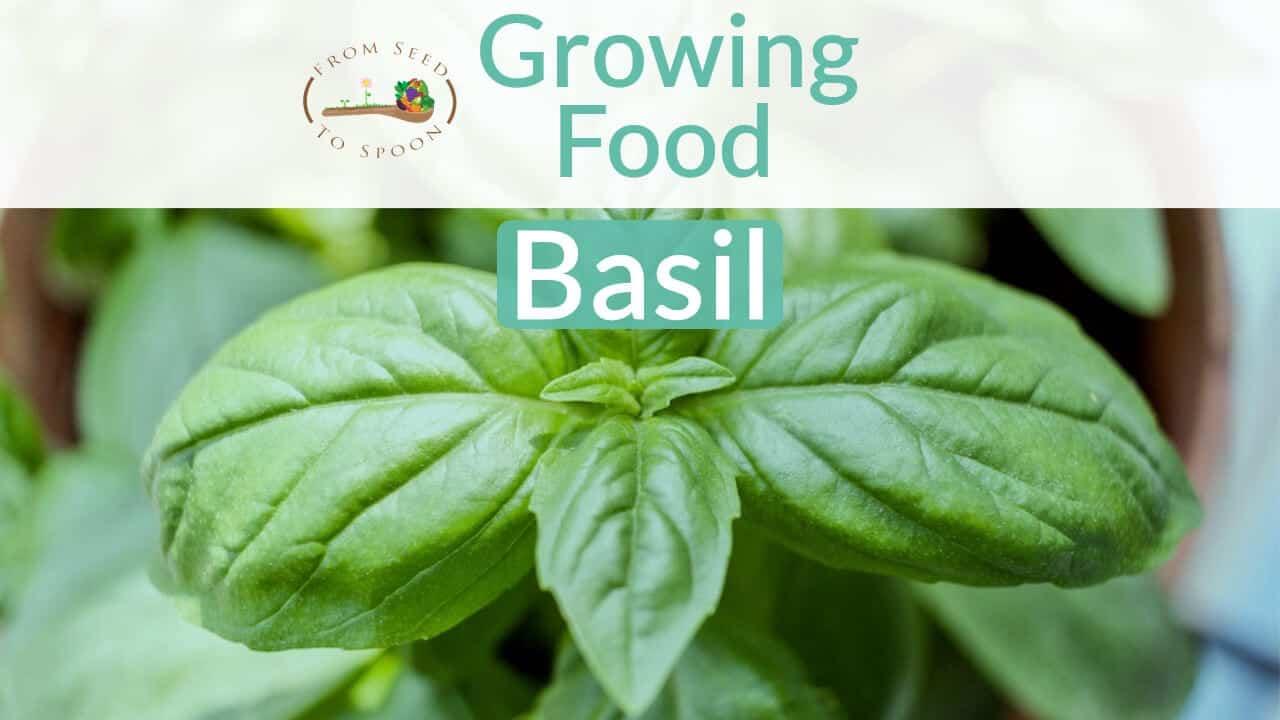 Basil blog post
