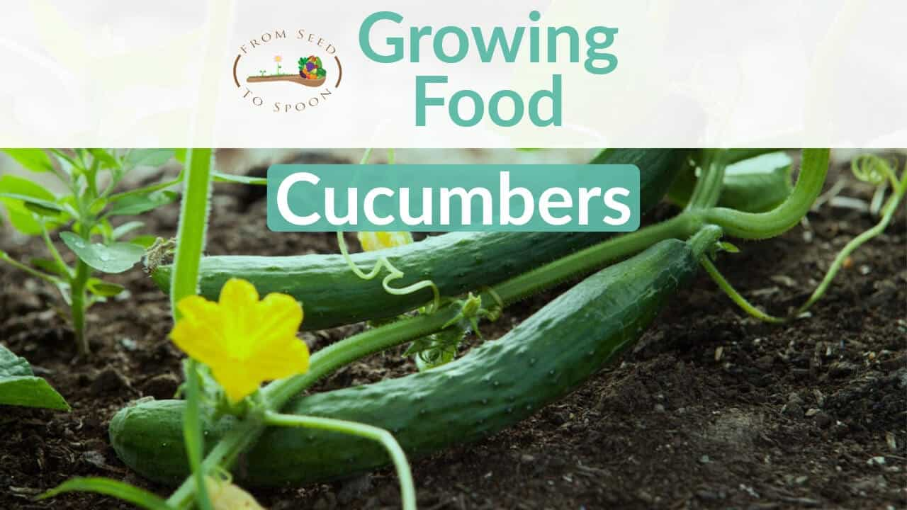 Cucumbers blog post