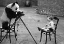 Panda bear taking photo of boy with camera