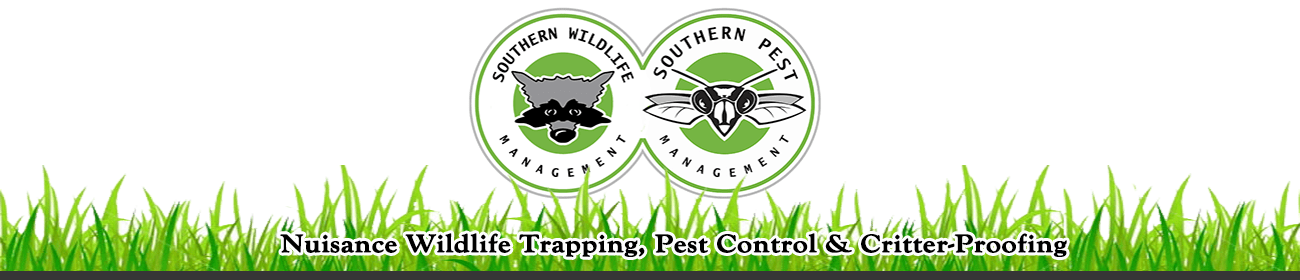 Southern Pest Management