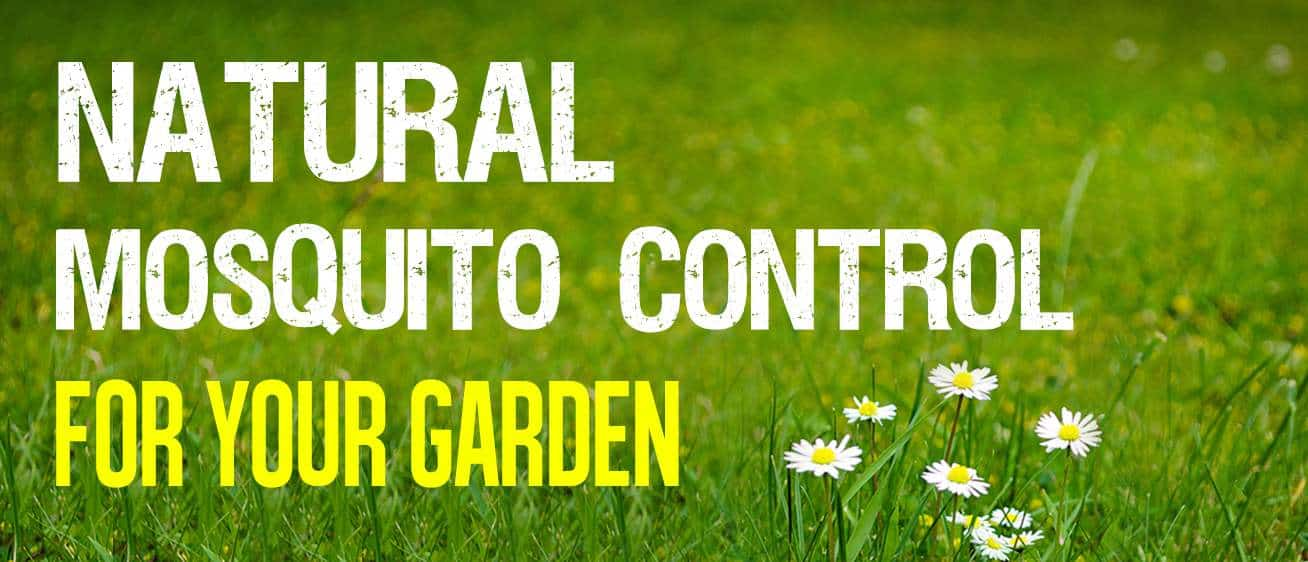 natural mosquito control for your garden
