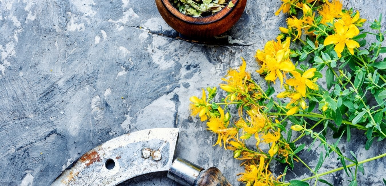 saint john's wort is a herb that a herbalist may recommend
