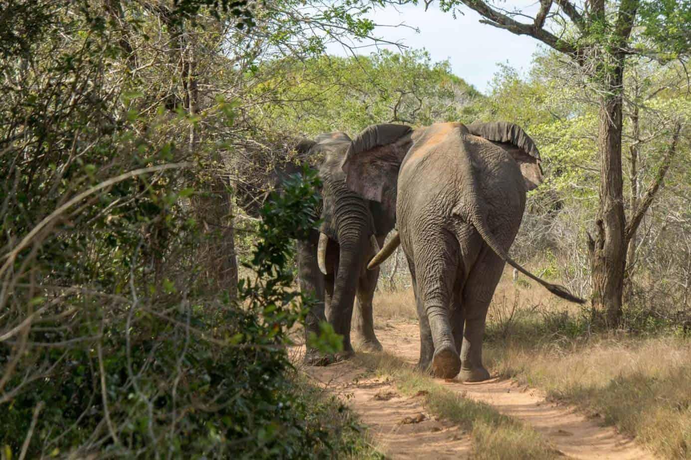 IMG 5594 - Tembe Elephant Park