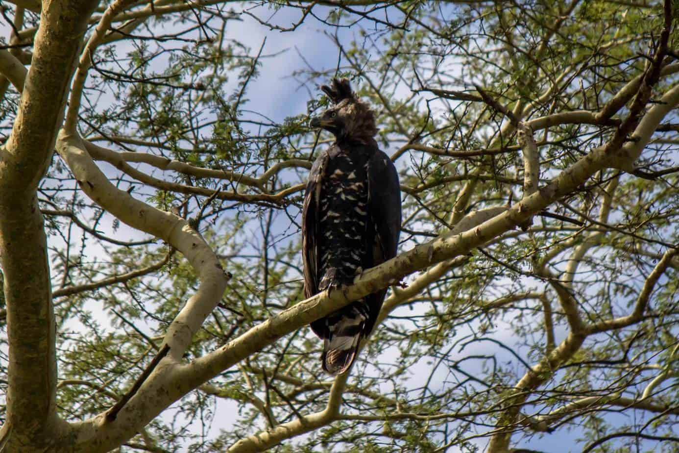 IMG 8022 4 - Ndumo Game Reserve
