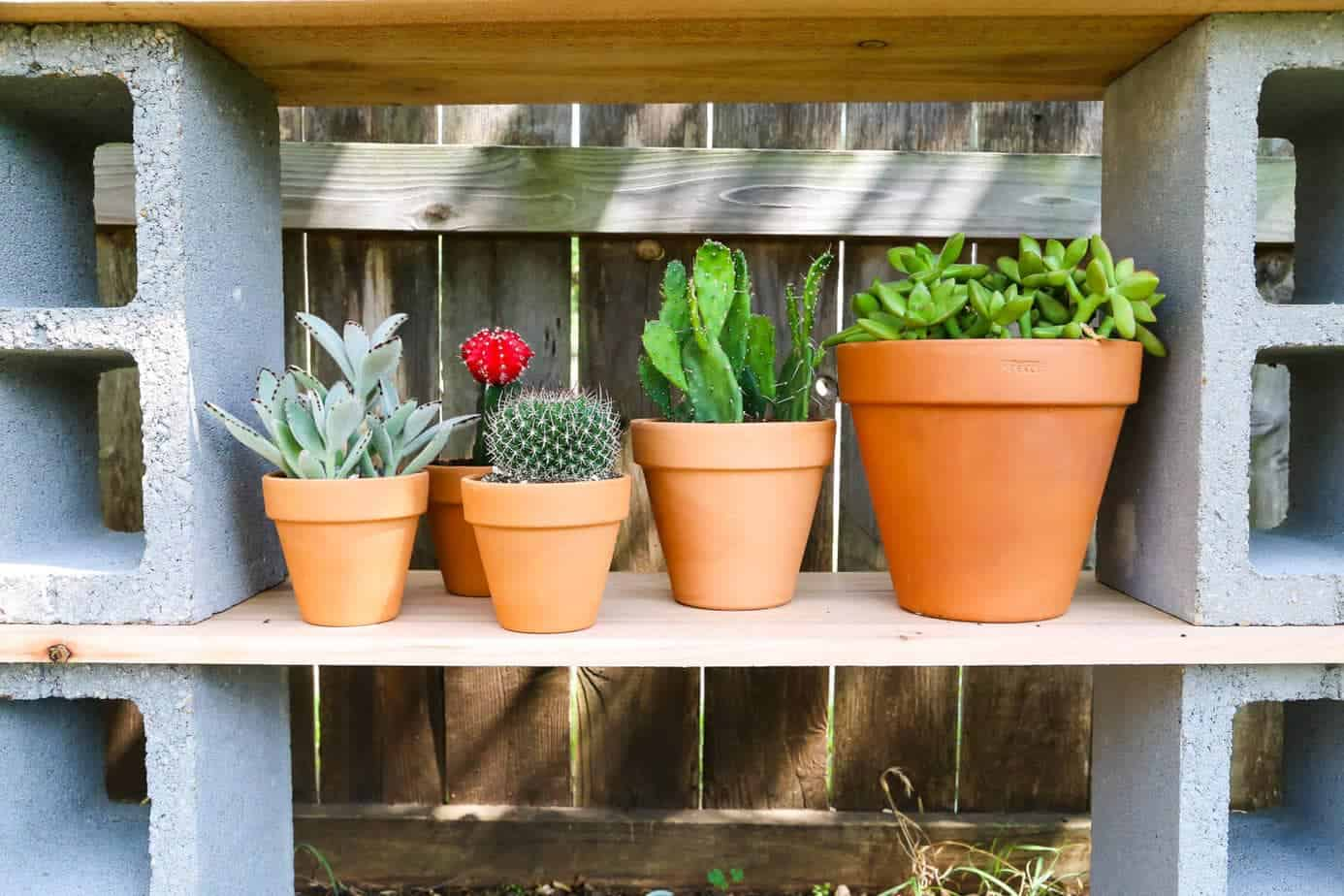 Succulents on outdoor plant shelf