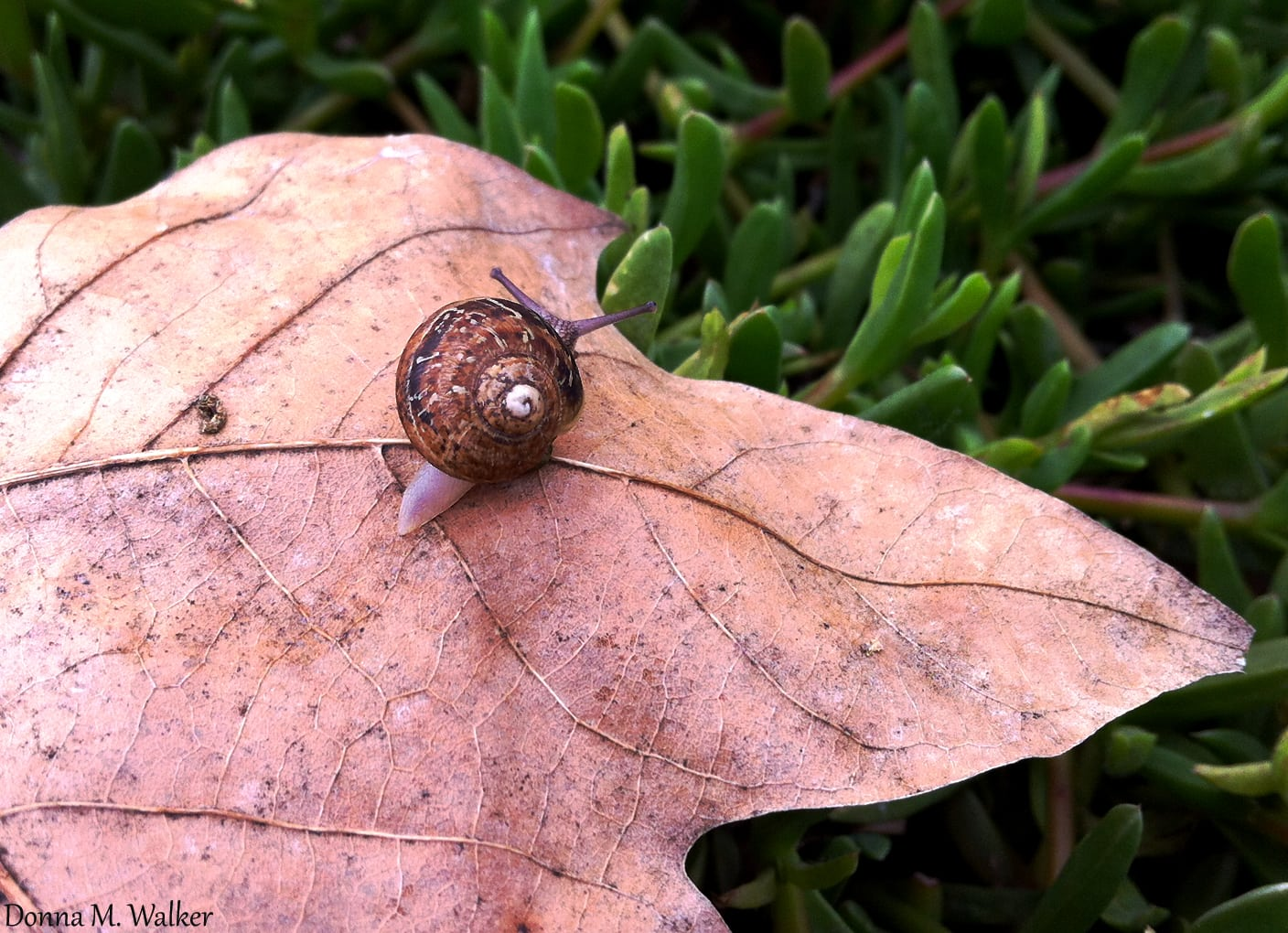 Snails are responsible for most of the leaf damage on your plants – and, they attract rats!