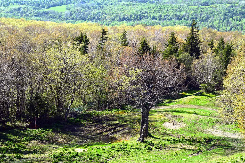 Nature in Spring Canada