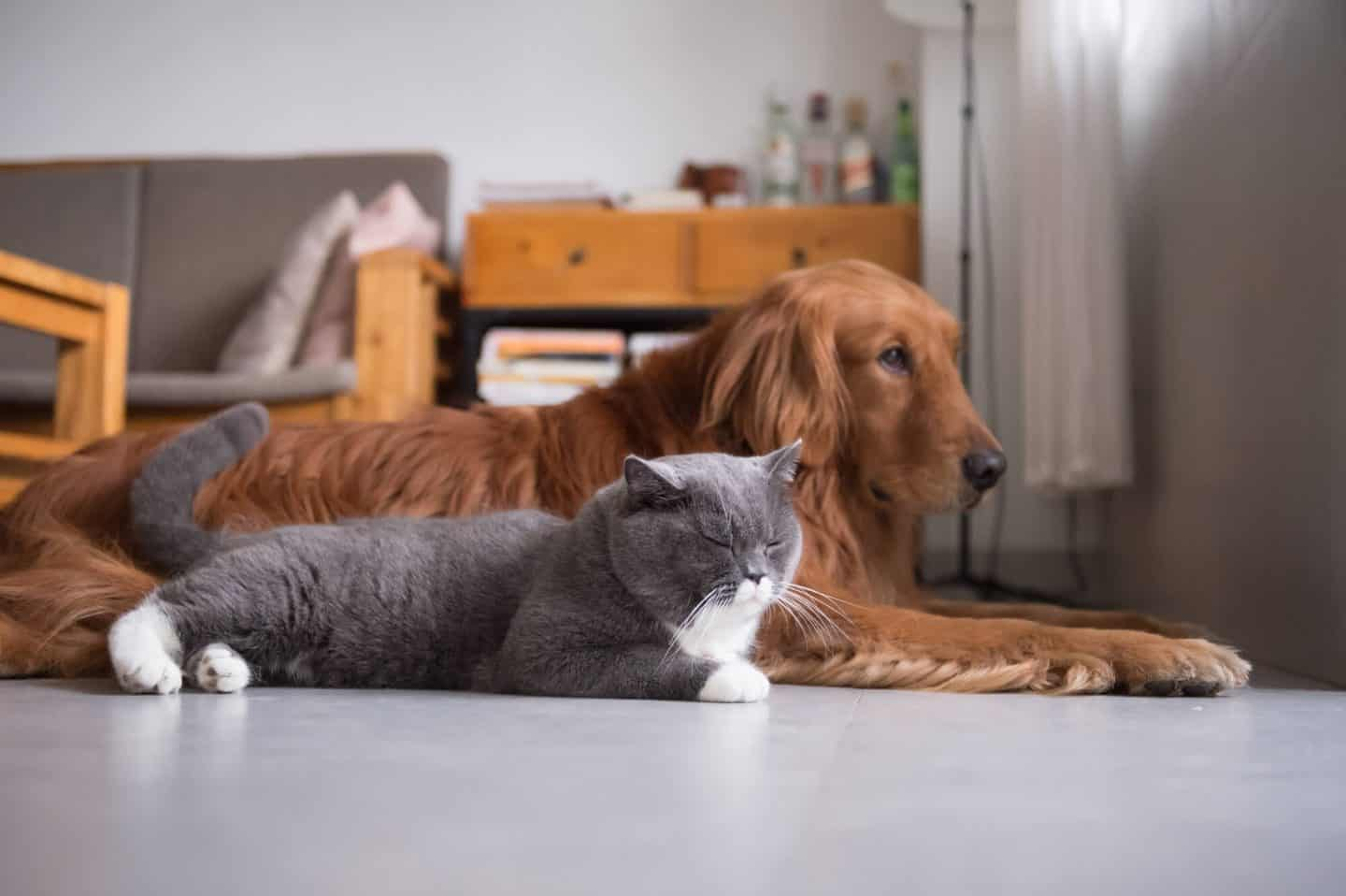 Things To Consider Before Buying A Pet