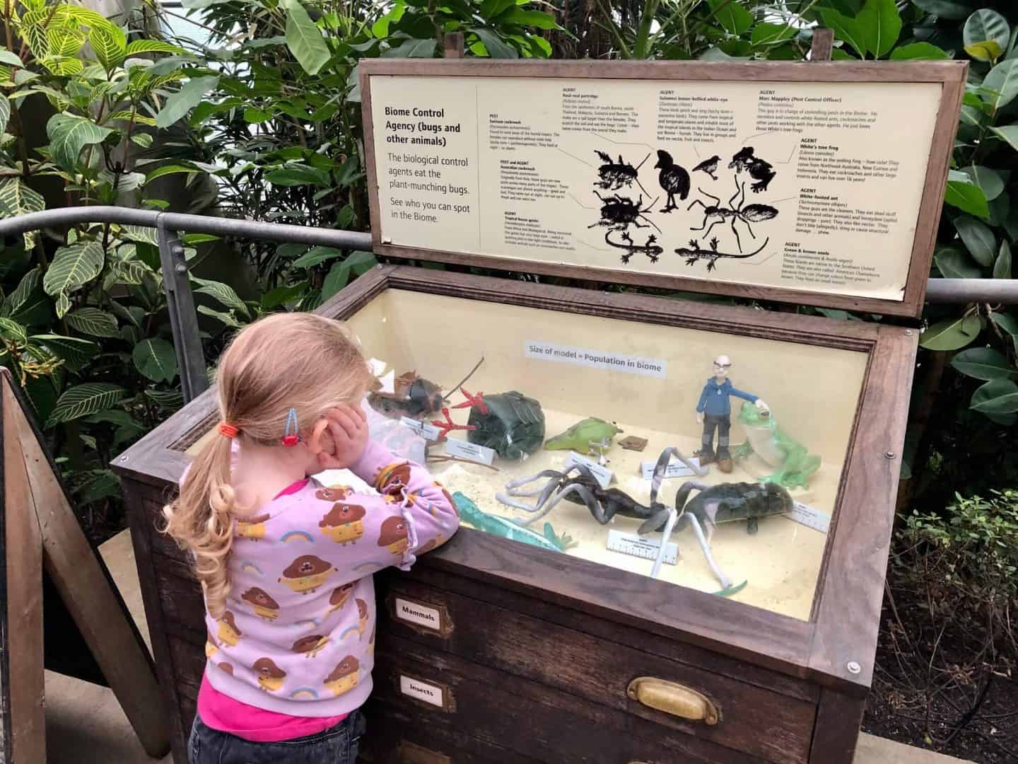 Rainforest Biome Control Agency - bugs and animals inside the biome