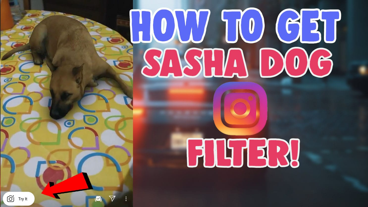sasha dog filter instagram