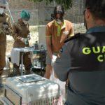 La Guardia Civil interviene doce especímenes de Lémur cola anillada que tenía un vecino de Nerpio