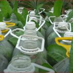 More tips for recycling plastic bottles growing spinach