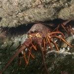 bugs at deep hole