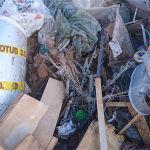 Baumischabfall günstig mit einem Hamburg Container entsorgen