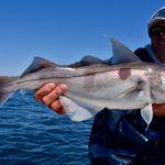 Grundens Bobby Rice Haddock Fishing