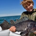 Cape Cod Black Sea Bass Charter Fishing with Reel Deal