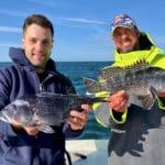Cape Cod Fishing Charters - Black Sea Bass