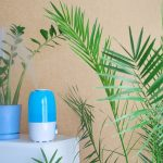 Plant Humidifier Reviews