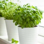 kitchen-herb-garden