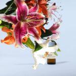Lilial Beyond Lilyflore Stimmungsbild