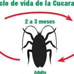 Consejos para evitar las cucarachas, por un Experto en eliminar plagas