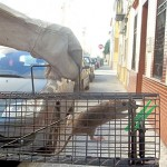 Plagas de Ratas en Córdoba y Sevilla. Roedores más comunes.