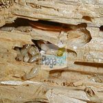Cómo identificar una plaga de termitas en casa o empresa