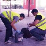 Plaga de ratas en Utrera – Sevilla