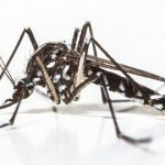 Llegan los mosquitos tigres a la provincia de Sevilla, como prevenirlos.