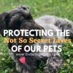 Xfinity Home Protects the Not So Secret Lives of Our Pets
