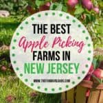 The Best Farms To Pick Your Own Apples In NJ