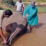In Bandarban, Bangladesh four elephants died in seven months