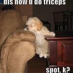 Dog Dips