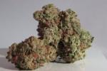 Cannabis Up Close