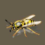 Alergia a las picaduras de insectos