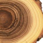 Time: Tree rings