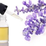 lavender a analgesic and anti-inflammatory herb