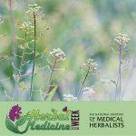 Herbal medicine week 2018