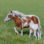 How Much Does a Miniature Horse Cost? Average Monthly Cost of Owning One