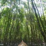 Kuala Selangor Nature Park (Taman Alam)