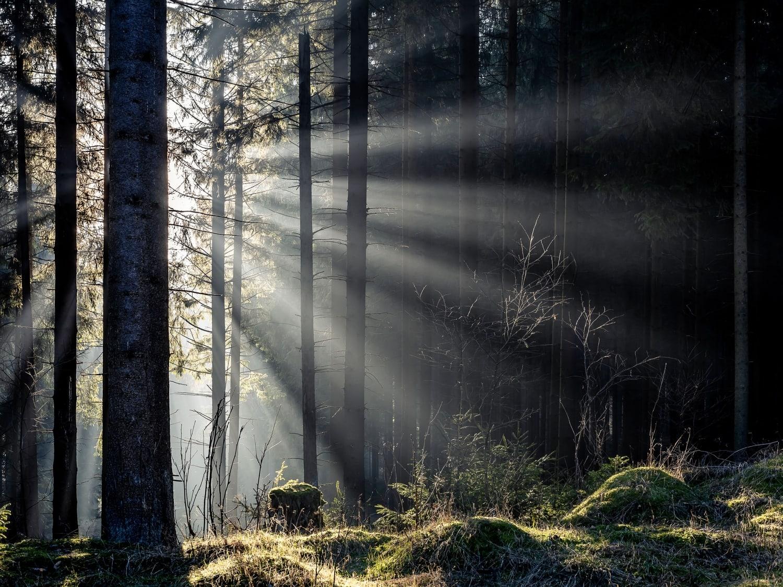 Lichtspiel im Thüringer Wald, unweit vom Freibachtal bei Stützerbach