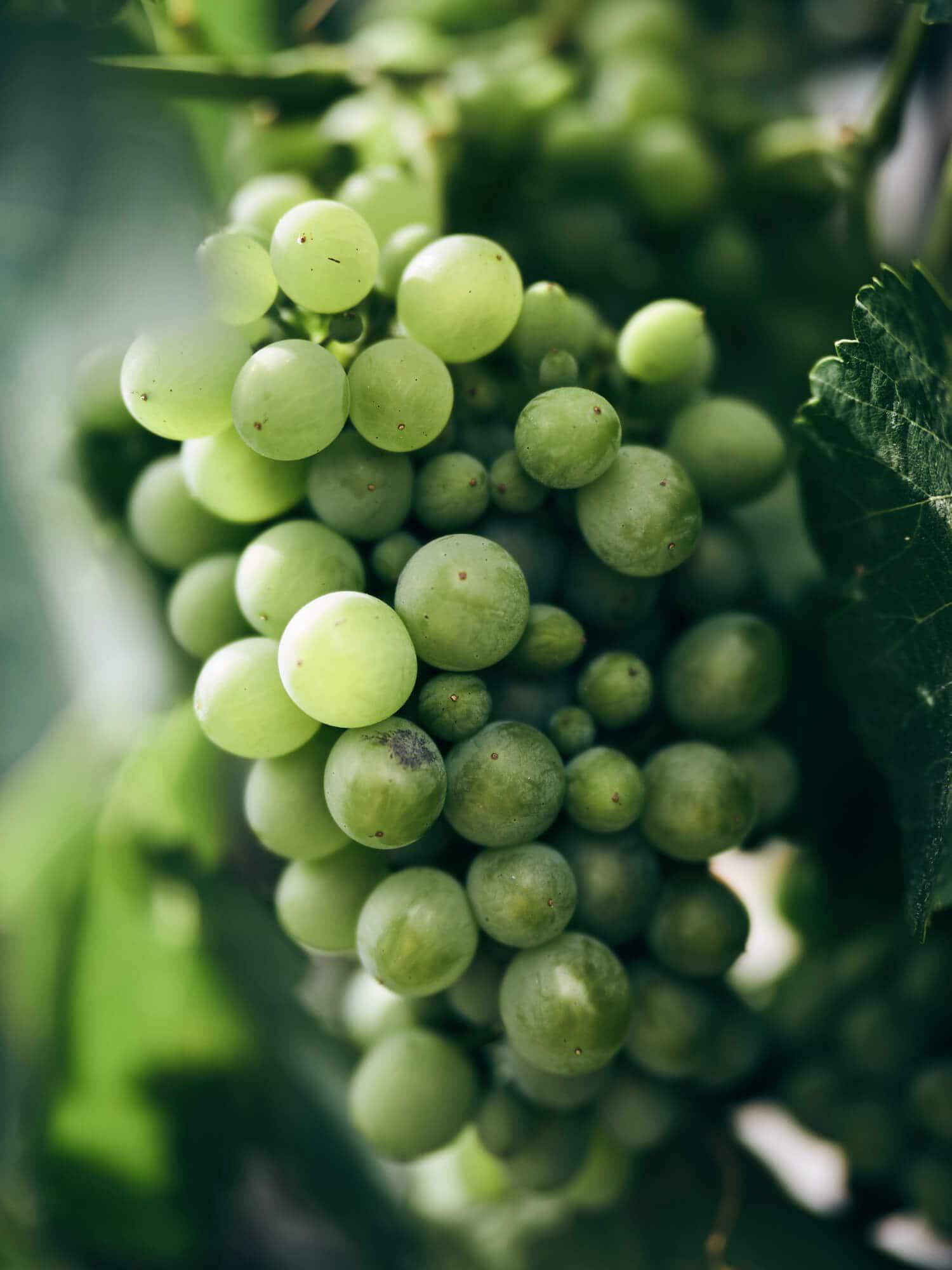Obst und Gemüse vom Bauernhof